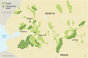 Tea Production Areas in Kenya